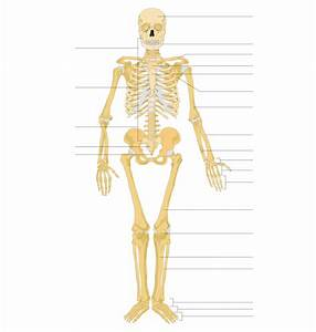 Labeled Human Skeleton