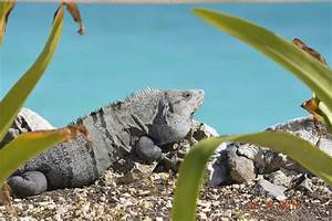 The Animals of the Sian Ka'an Biosphere Reserve