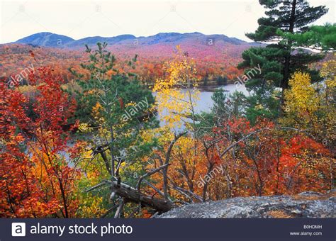 indian summer pflanze view autumn coloured leaves to lac stukely lake indian summer stock photo 17594321 alamy