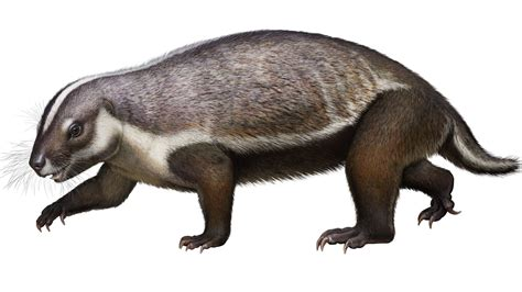 Palaeontologists Discover Bizarre Mammal Called Crazy