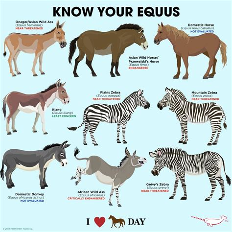 horse equine animals animal horses science species facts