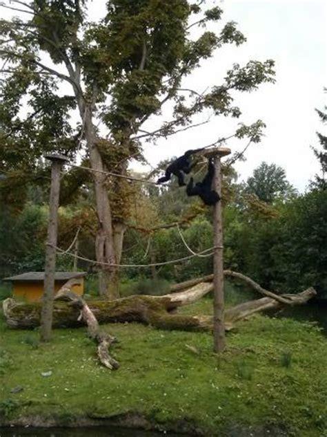 Kleines Bad Pyrmont 2018 by Tierpark Bad Pyrmont Aktuelle 2018 Lohnt Es Sich
