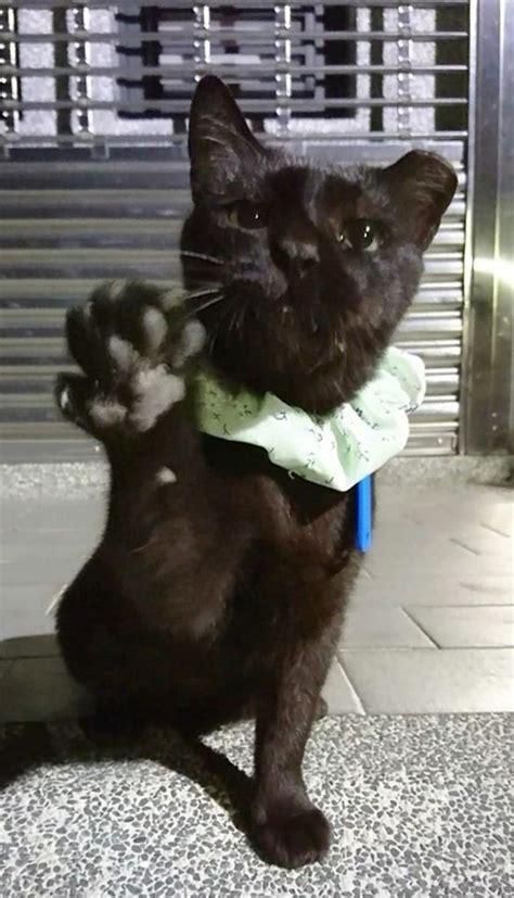 Search for text in url. 黑貓「大娘」萌眼戴領巾,開掌花討食萌翻:「五百拿來!」   CatCity 貓奴日常