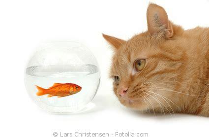 Bluthochdruck Katze Homöopathie
