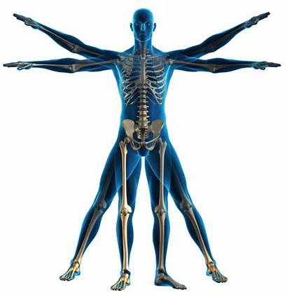 Human Outline Physiotherapy Physical Therapy Clipart Physio