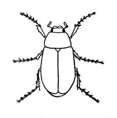 printable pictures  insects    clipartmag