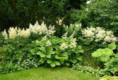 Tolle Blumen Für Schattige Ecken In Ihrem Garten