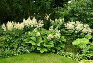 Pflanzen Im Schatten : tolle blumen f r schattige ecken in ihrem garten ~ Orissabook.com Haus und Dekorationen