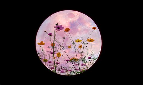 april full pink moon  scorpio  affect