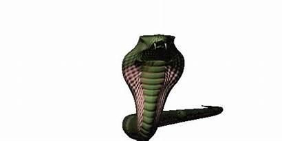 Cobra Cobras Mm6 Wiki Queen Stats