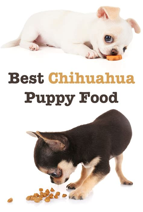 food  chihuahua puppy tips  reviews