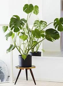 Große Zimmerpflanzen Pflegeleicht : zimmerpflanzen bilder gem tliche deko ideen mit topfpflanzen zimmerpflanzen pinterest ~ Markanthonyermac.com Haus und Dekorationen