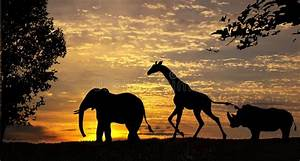 African Grasslands Stock Image Image Of Elephants