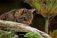 Scotland Wild Animals