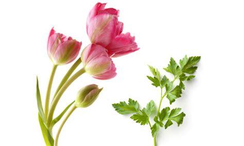 piantare tulipani in vaso autunno tempo di tulipani piante in fiore e il mio
