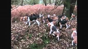 You Tube Chasse : chasse beagle youtube ~ Medecine-chirurgie-esthetiques.com Avis de Voitures
