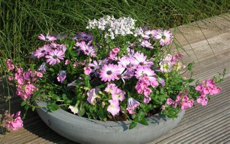 vaste planten voor plantenbakken buiten