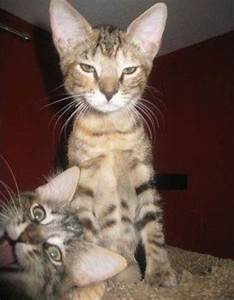 38 Funniest Cat Photobombs Of All Time. #23 Just Killed Me ...