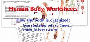 Science  Human Body Unit Archives