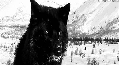 Wolf Twilight Gifs Dog Deviantart Imgur Hunt