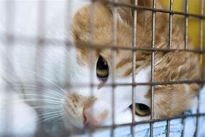 An Open Letter to People Who Surrender Their Pets to the ...