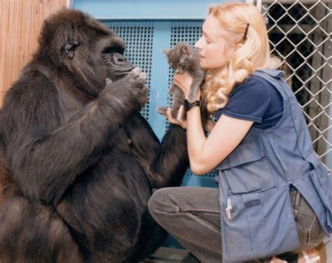 odd animal friendships  melt  heart
