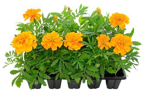 Blumen Für Den Balkon by Blumen F 252 R Blumenk 228 Sten Archives Balkon Oasebalkon Oase