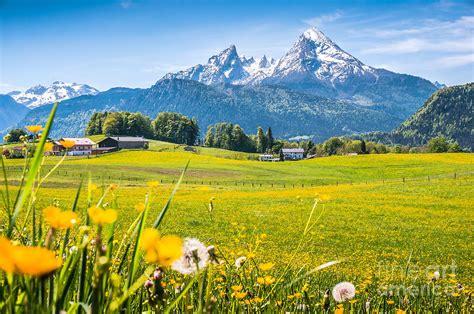 beautiful austrian mountain landscape  flowers