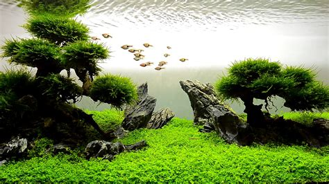 What Is Aquascaping by Jbl Aquascaping
