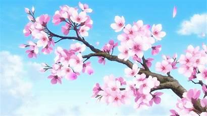 Anime Cherry Sakura Gifs Wallpapers Blossom Moving