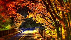 Top 50 Wonderful Road Wallpapers Images And Pictures Stock ...