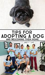Tips for adopting a dog home welcome home and keep in mind for Adopting a dog tips