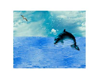 Dolphin Jumping Sea Ocean Shimmering Animated Gifs