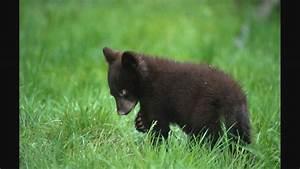 Black Bear  By Black Bear  W   Lyrics
