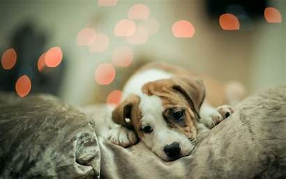 Puppy Dog Wallpapers Windows Able Below