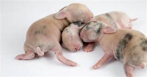 Image Gallery Newborn Rabbits