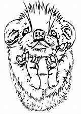 Porcupine Coloring Pages sketch template