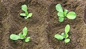 Pflanzen Im Juli : endivien s en bis juli in den eigenen garten oder ins hochbeet ~ Orissabook.com Haus und Dekorationen