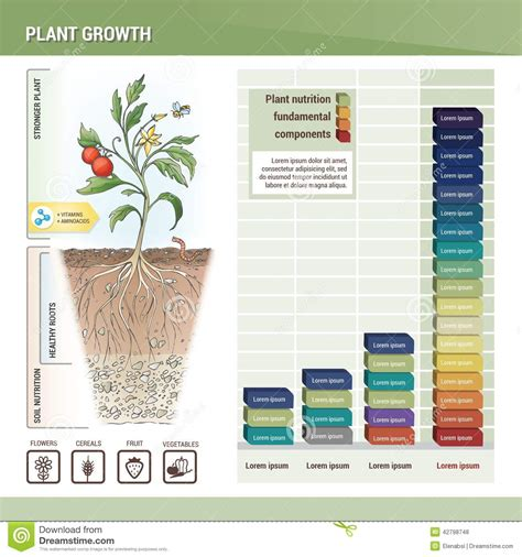 plant growth stock vector illustration  fertiliser