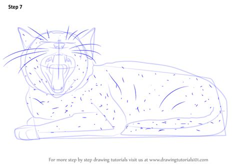 learn   draw yawning cat cats step  step