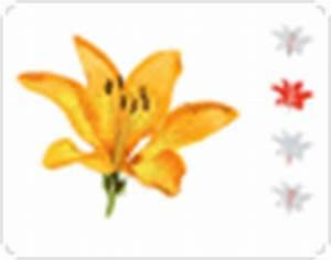 Aufbau Einer Blume : pflanzenreich bl te bilder bildw rterbuch ~ Whattoseeinmadrid.com Haus und Dekorationen