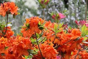 Plantes Et Jardin : plantations arbor min ralarbor min ral ~ Melissatoandfro.com Idées de Décoration