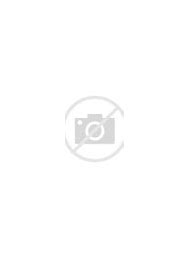 Most Beautiful Rose Flowers