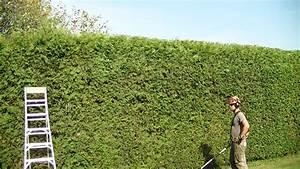 Taille Des Haies : portfolio pro tec arbres pro tec arbres ~ Dallasstarsshop.com Idées de Décoration