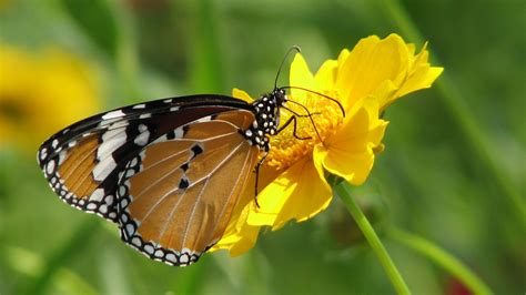 Awesome Butterfly High Definition Wallpaper