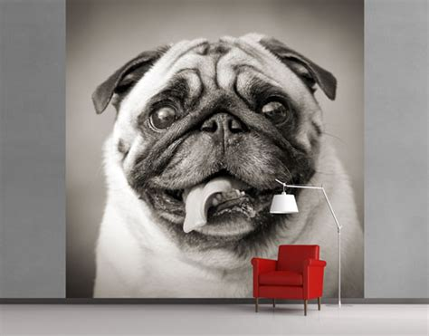 fleece wall mural funny pug wallpaper fleece mural dog