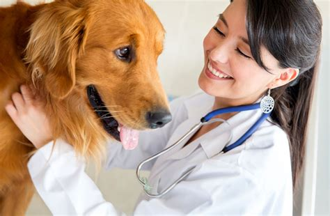 Vet Salary by Average Veterinarian Salary 2018 Income Hourly Wages