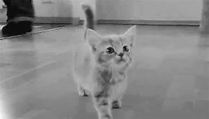 kittens kitties gif | WiffleGif