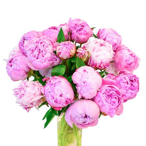 Rozā peonijas šis ir pušķis no svaigiem grieztiem ziediem ...