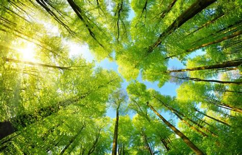 protecting  environment rotary international